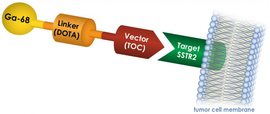 Medical illustration showing how GA-68 DOTATOC targets SSTR2